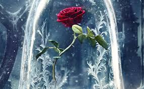 rose beauty n the beast